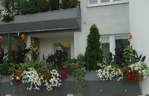 """""""Pamiętajcie o ogrodach i balkonach…"""""""