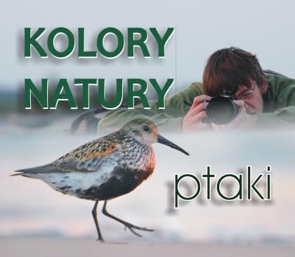 Kolory natury – ptaki
